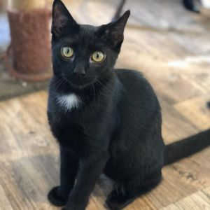 Holly Berry is a playful 6-month-old she loves people and adjusts quickly to meeting new catskitte