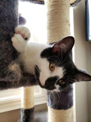 ?bust=1618935106&width=300 - Adopt a Cat