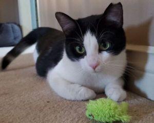 ?bust=1611502047&width=300 - Adopt a Cat