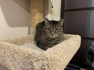 ?bust=1611502027&width=300 - Adopt a Cat