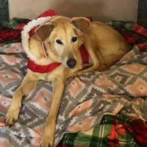 Cornflake is a gentle girl who gets along with people and other dogs She is easy going and laid bac