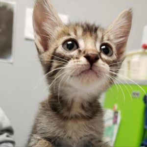 Hello my siblings and I are new to the shelter but we are all sweet and playful and looking for