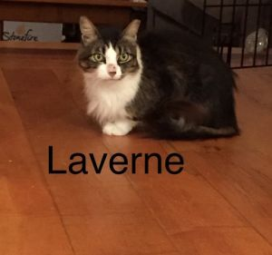 Laverne was a warehouse cat until the summer of 2020 when the business that had
