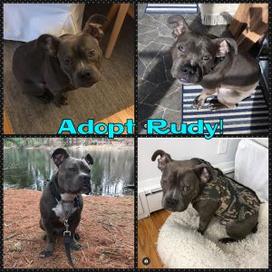 Where is Rudys forever family This little guy has been waiting almost a year for the right home t