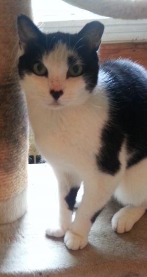 Im lovely Lilly a senior boy cat who urgently needs a foster home or an adopte
