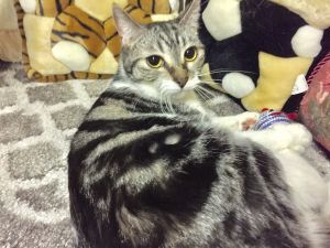 Kiwi female  her brother Maxi are a 3-4 year old bonded pair Maxi is a little naughty Kiwi is