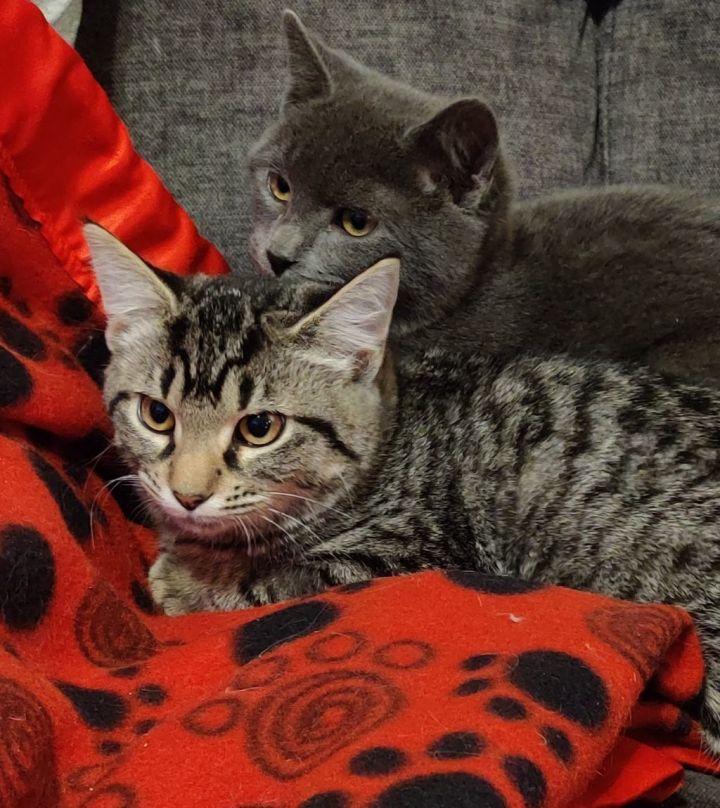 Oliver & Georgie Girl 1