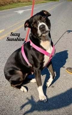 Suzy Sunshine 2