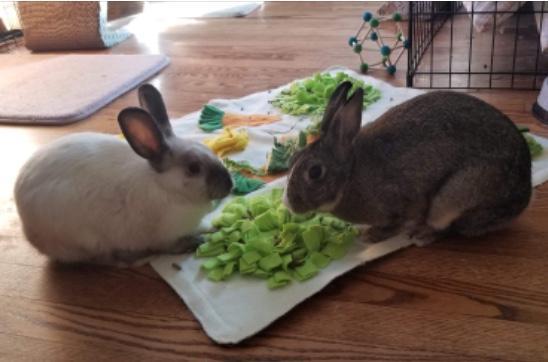 Bunny Boy & Bunny Girl 1