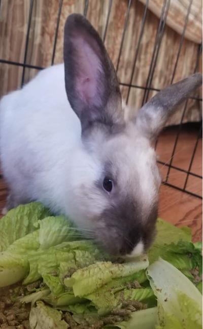 Bunny Boy & Bunny Girl 3