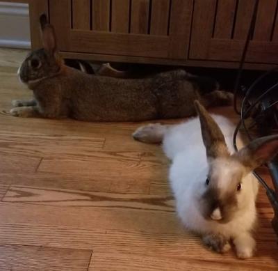 Bunny Boy & Bunny Girl 4