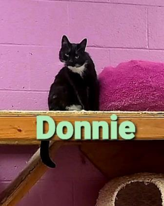 Donnie 1
