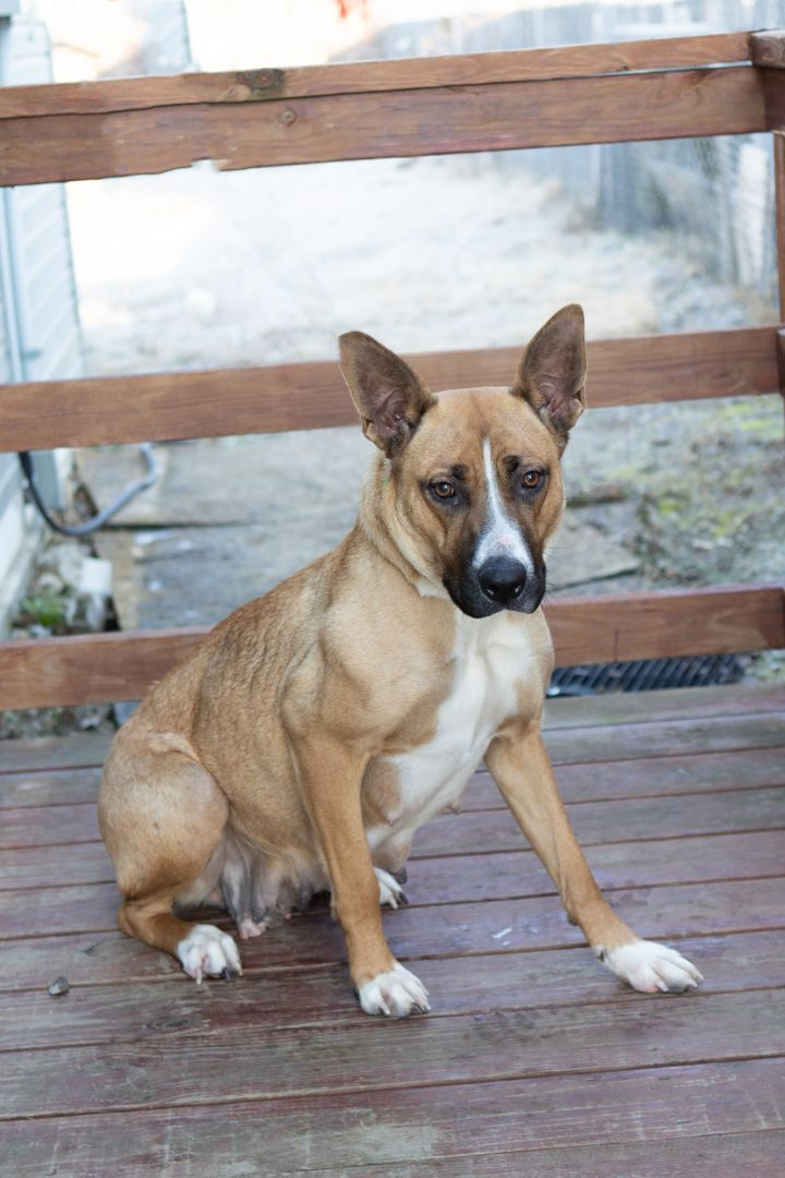 SODA POP, an adopted Mixed Breed in Cape Girardeau, MO
