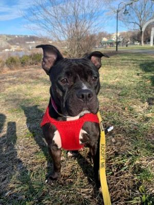 Im 2 year old Sugar I came into a Georgia shelter with a prolapsed rectum I have to stay on