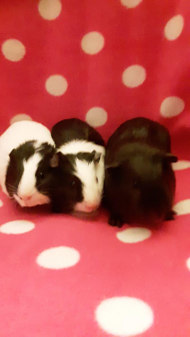 Baby girls Ivy, Jenna, And Dessie 1