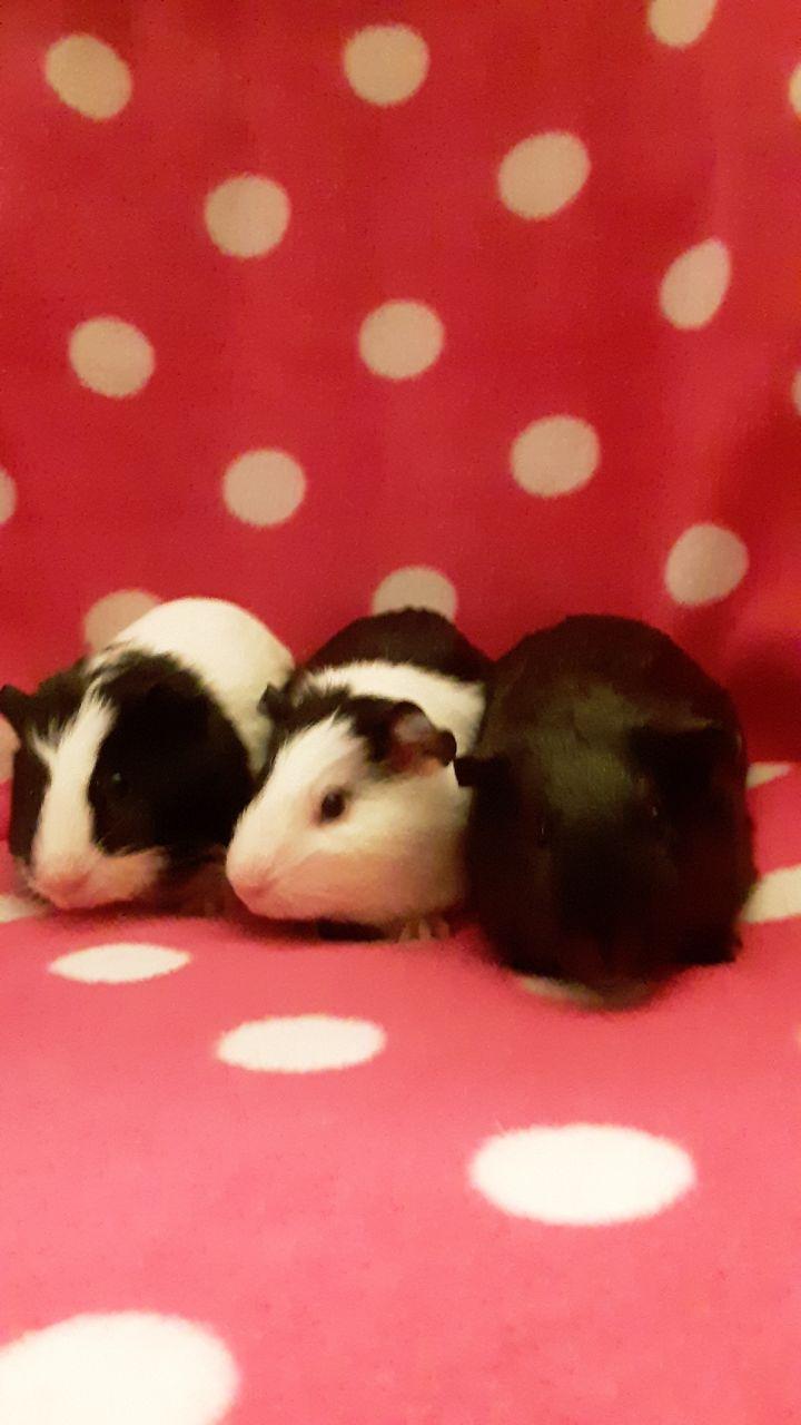 Baby girls Ivy, Jenna, And Dessie 2