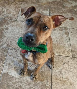 You can fill out an adoption application online on our official websiteRocky TX is a male mixed b