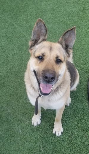 Hi there my names Missy and Im in search of a loving furr-ever home of my very own Im a