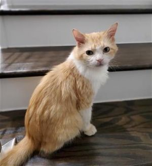 Sir George Purrst of his Name is a 8 year old male His smile might be a little goofy but