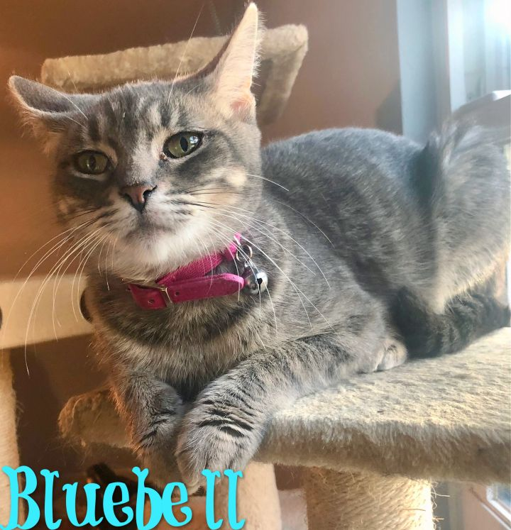 Bluebell 1