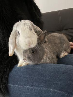 Kenai & Koda (bonded pair)