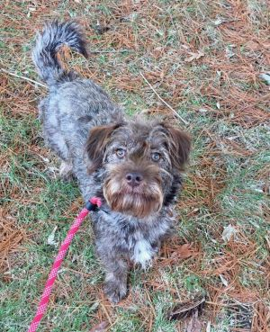 Zigi is a 1yr old neutered male and weighs about 35lbsHe is a sweet boy and lots of fun once