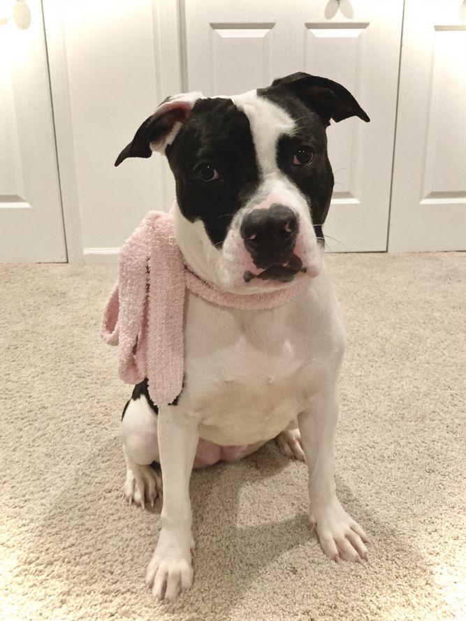 MooMoo (best friend/lap buddy)