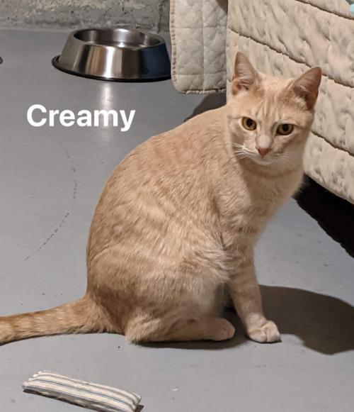 Creamy 1