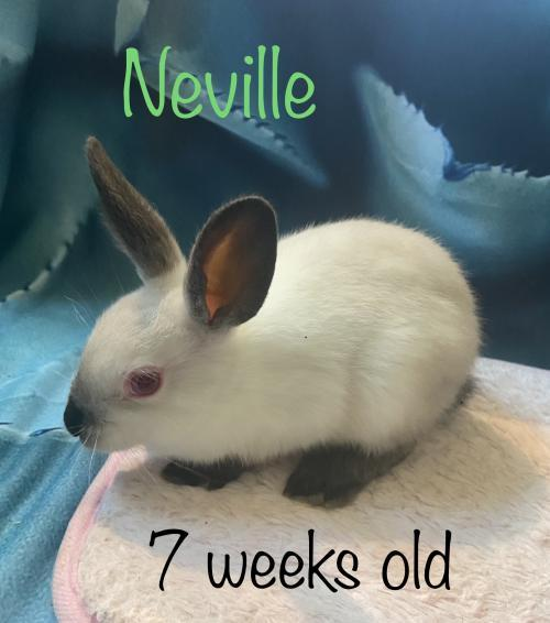Neville- adoption pending
