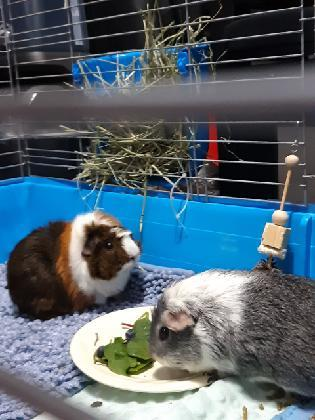 Buttercup and Luna,  * Courtesy Post! *