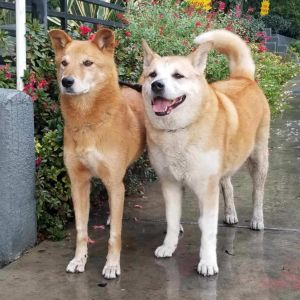 Hopper and Red are a BONDED PAIR and need to be adopted together They lived together outside on a