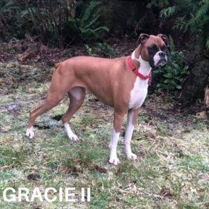 Gracie II