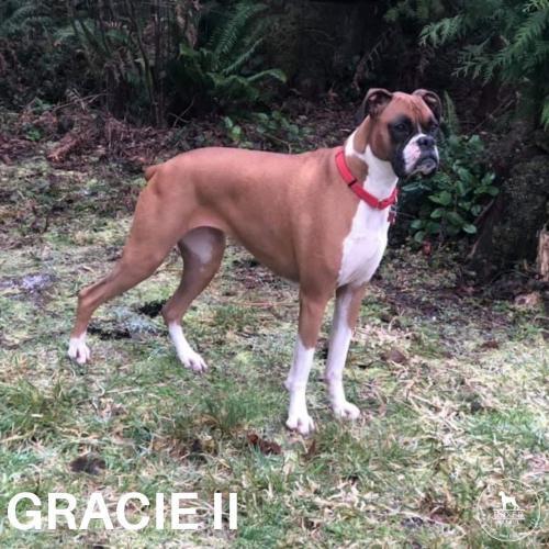 Gracie II 1