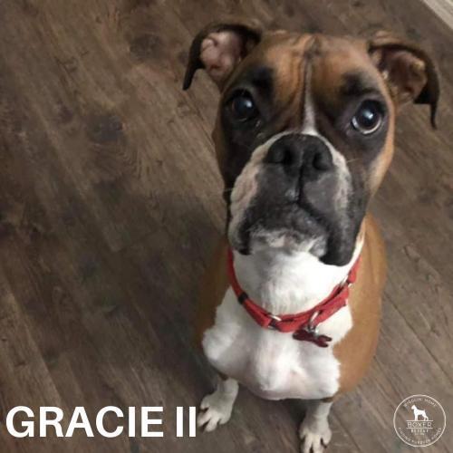 Gracie II 2