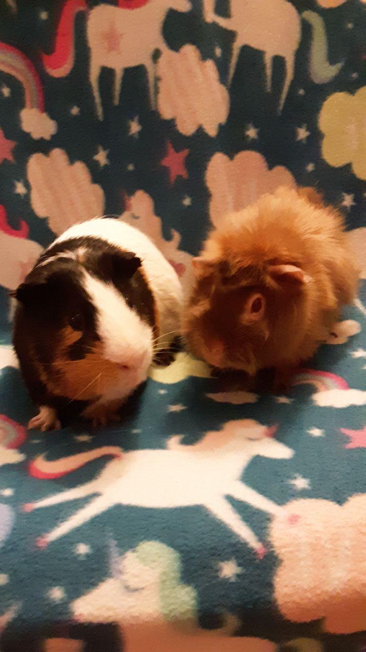 Winnie and Bruno 2