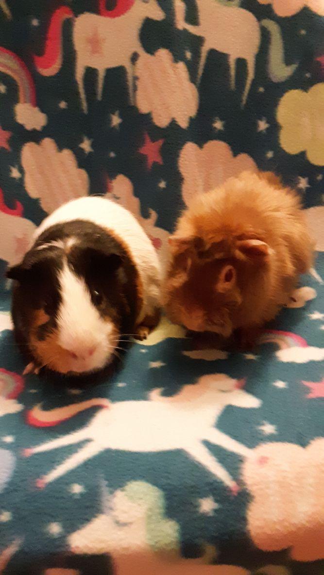 Winnie and Bruno