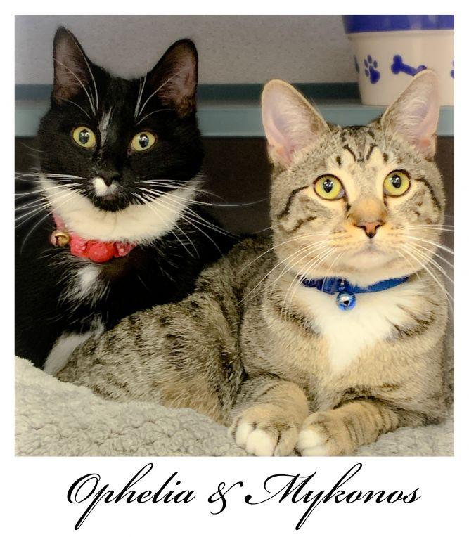 Ophelia & Mykonos BONDED PAIR