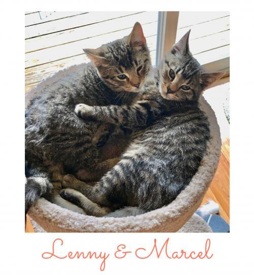 Marcel (with Lenny) 1