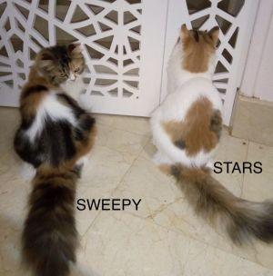 Stars & Sweepy Kuwaiti Not Mom & Daughter