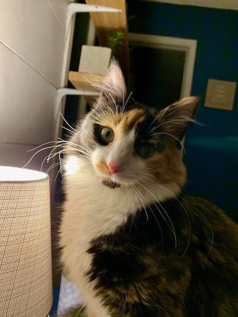 Frankie - Pending Adoption 2