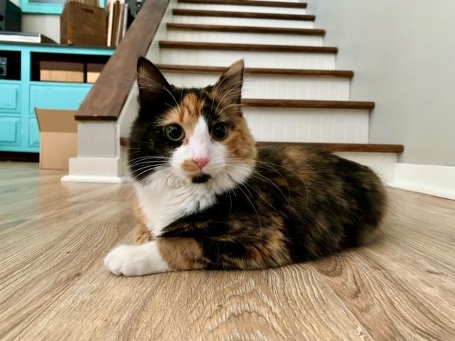 Frankie - Pending Adoption 4