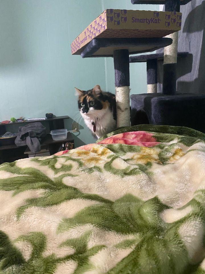 Kitty - Pending Adoption 2