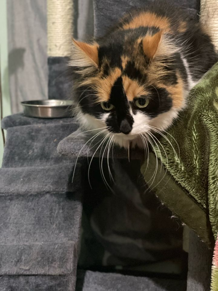 Kitty - Pending Adoption 3
