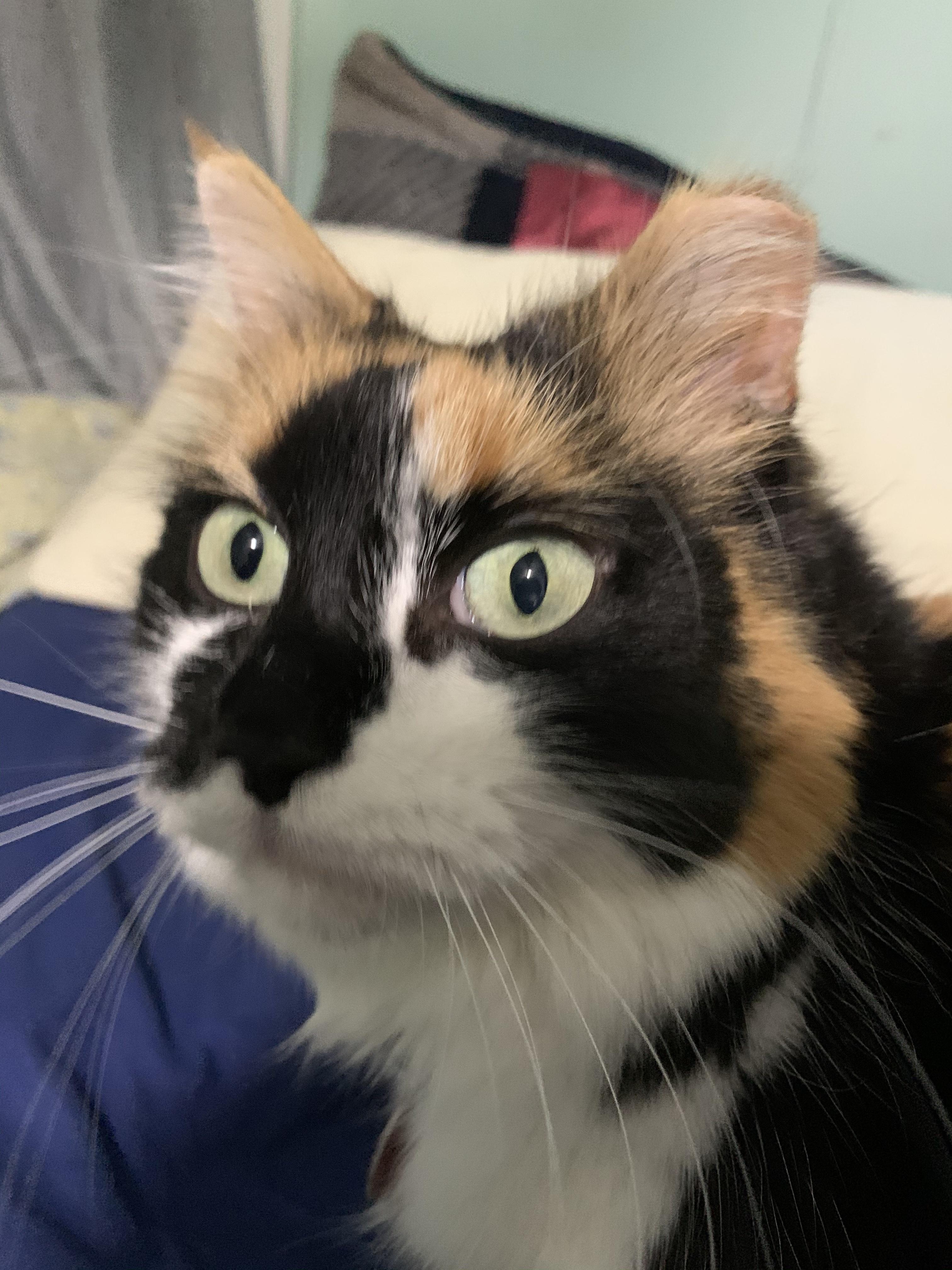 Kitty Pending Adoption detail page