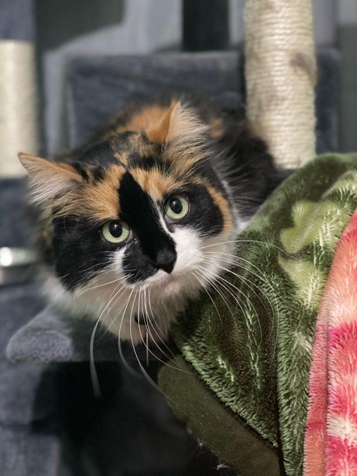 Kitty - Pending Adoption 5