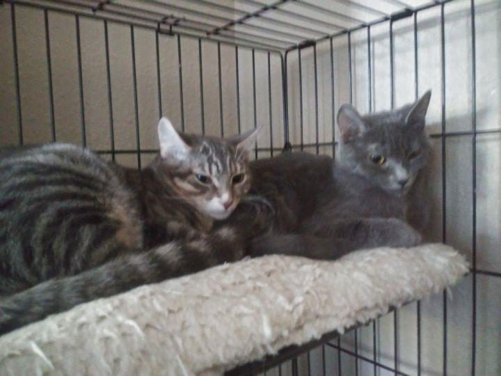 Nori & Viola - Bonded sisters 2