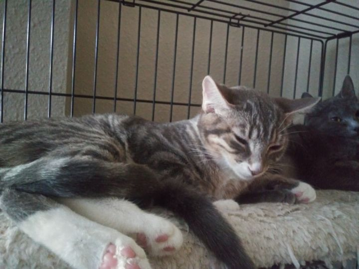 Nori & Viola - Bonded sisters 5
