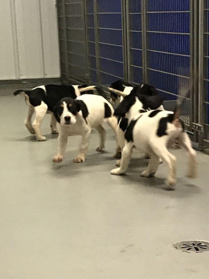 Puppies! 4 girls 1 boy