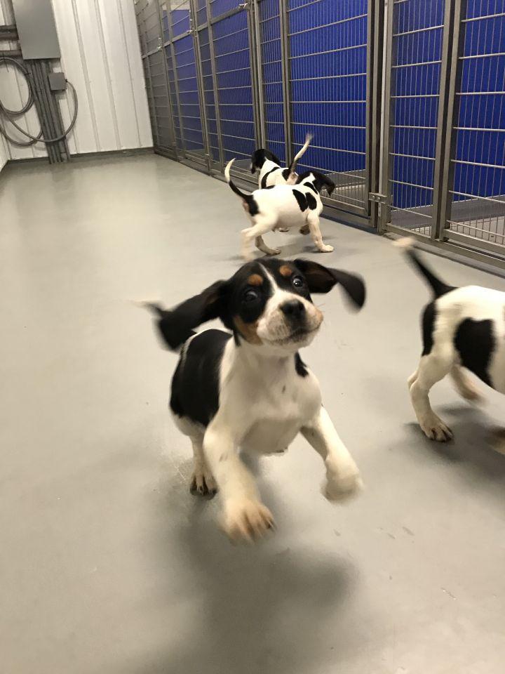 Puppies! 4 girls 1 boy 6