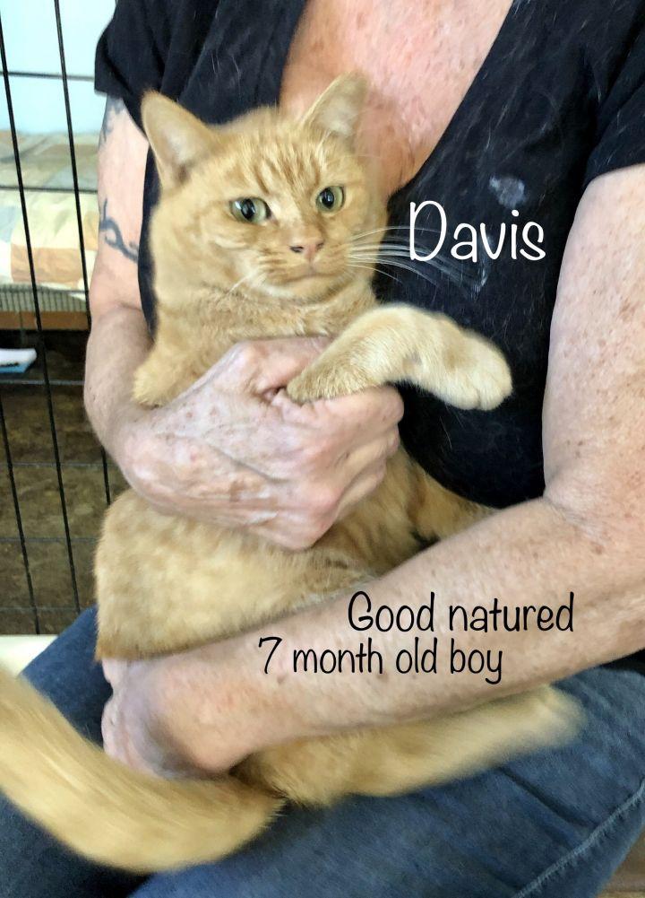 Davis 3
